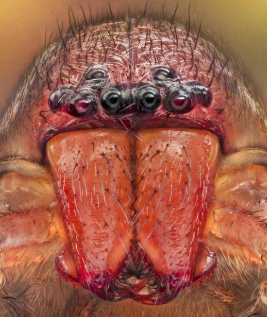 拍摄蜘蛛 模样怪异似外星物种
