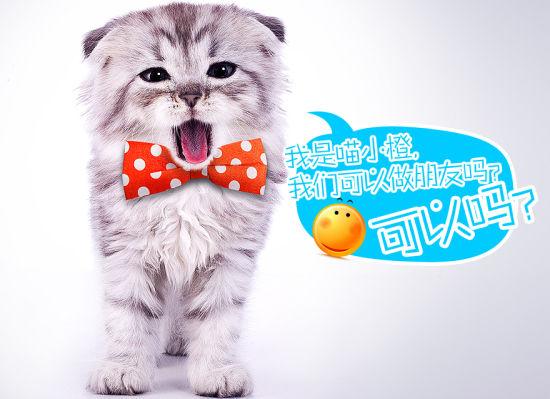 """广州联通新推出的服务形象大使""""喵小橙"""""""