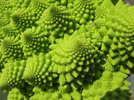 惊叹!世界上外观最奇妙的花椰菜