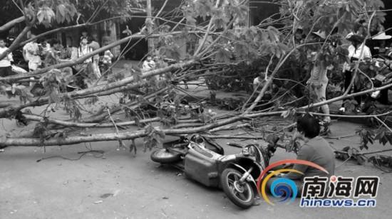 海口路边大树突然倒下 2骑电动车女子被砸中