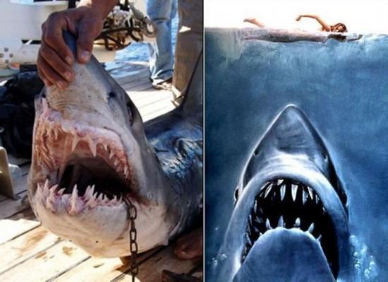 惊险!全球动物袭击人类的恐怖瞬间