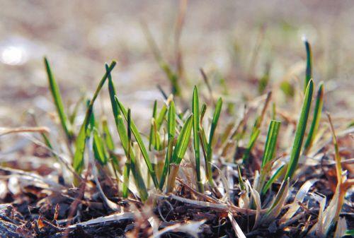 阳连日高温催生草木破土发芽