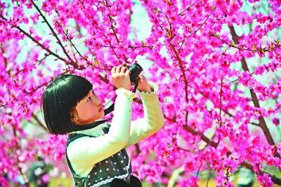 桃花朵朵开阿牛