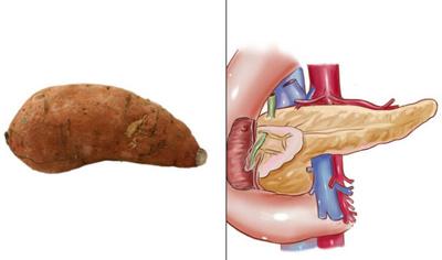 以形补形 十大形似人体器官的果蔬【10】--海南