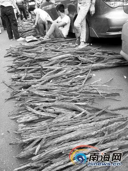 海南降真香价格3个月翻10倍 林木遭大肆砍伐
