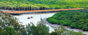 海南将建三江红树林湿地公园 打造第2个万绿园