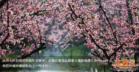 2014平谷桃花节赏花组图王者攻略(攻略)【11路线自驾图片