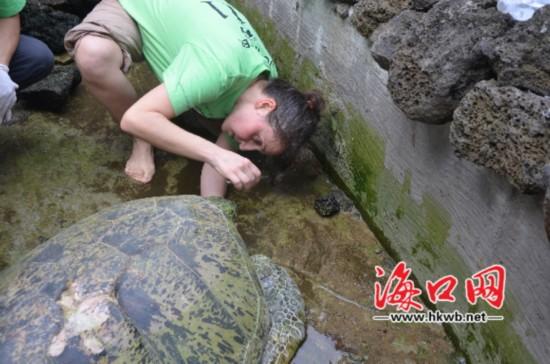 百岁海龟受伤海口搁浅 国际保护人士帮疗伤