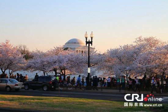 大量游客前往华盛顿潮汐湖畔欣赏樱花