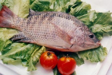 养生必知:饭桌上最常吃的6种鱼哪种最营养【12】健康卫生频道
