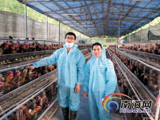 屯昌夫妻放弃年薪20万工作 养鸡帮村民致富
