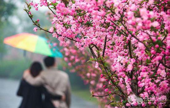 烟花三月下扬州 把眼睛埋进春天里 组图