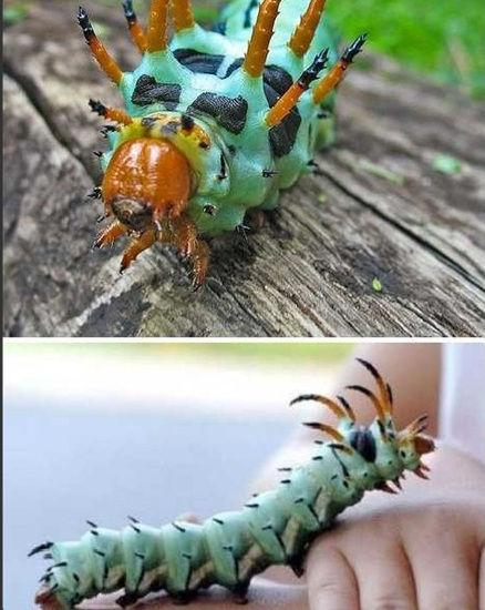 动物界7大魔头谁厉害 魔鬼蛙可捕食小恐龙
