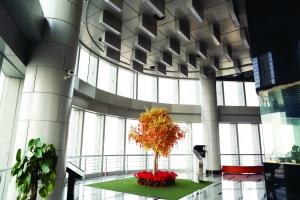 南京紫峰观光层全球寻买家 每平米报价7万元