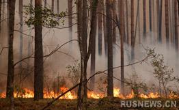 俄远东发生森林火灾动用三千余人从事扑灭工作