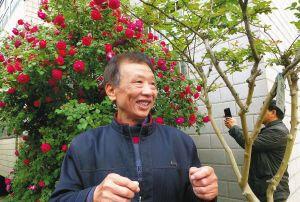 徐州民宅有株月季花开2000多朵 香飘几十米