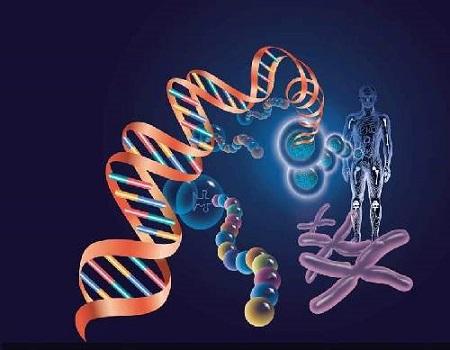 """研究称人类""""性别基因""""最早产生于1.8亿年前"""