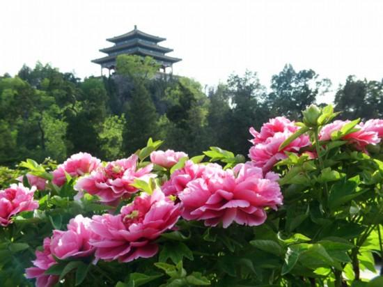 2014北京清明踏青赏花 西城春游赏花全攻略