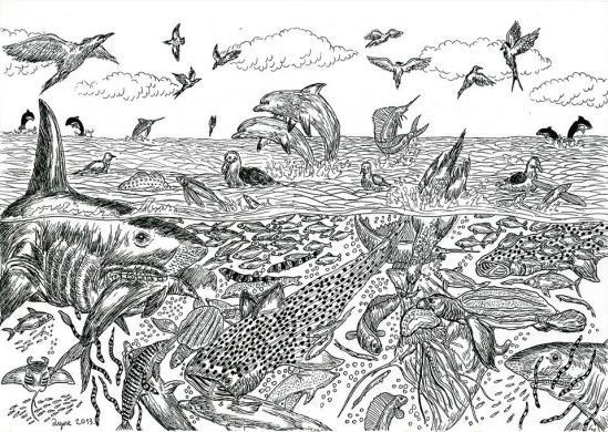 塞尔维亚11岁小画家擅长画野生动物【3】