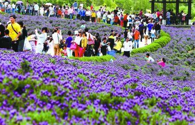 百万城里人赴南京乡间度假 农家乐收入超亿元