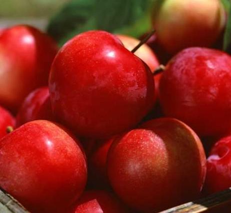 草莓提高免疫力防癌 盘点10大最便宜长寿食物