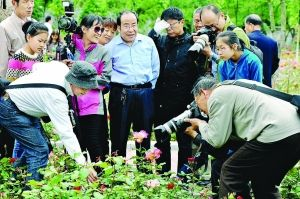 淮安月季园数万株鲜花竞相开放 吸引市民观赏