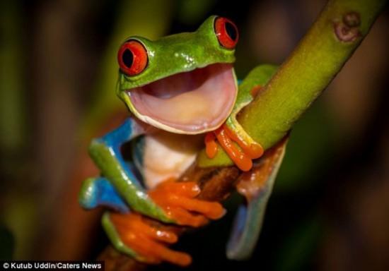 英男子偶拍青蛙微笑瞬间酷似布偶明星克米特