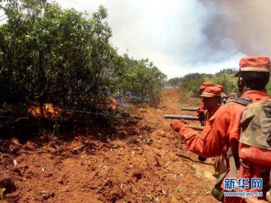 云南牟定发生一起森林火灾 过火面积约300亩