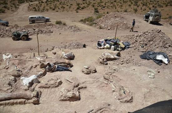 南美工人意外发现最大恐龙化石高约7层楼