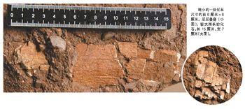 好神秘的化石!是新物种还是未知恐龙?