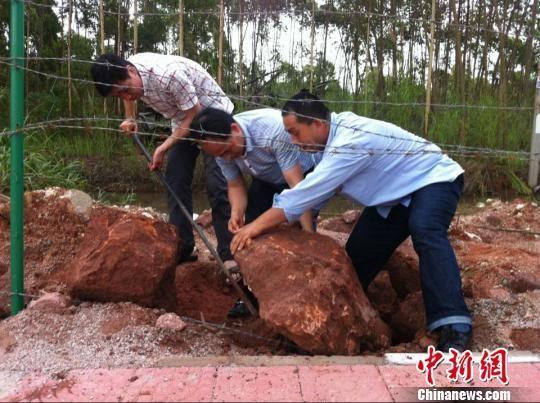 图为古生物化石挖掘现场。 凌丽 摄