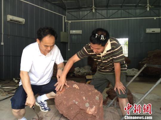 图为文物考古工作人员正对古生物化石进行查看。 凌丽 摄