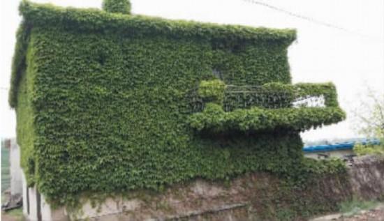瓦房店现 最绿色房子 房主自称住著很不爽