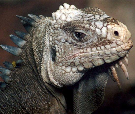 全球最恐怖最罕见动物 你能叫出多少名字