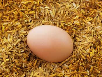 健康提示:7种食物和鸡蛋一起吃会早死