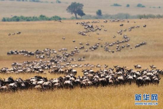 也是大批迁徙动物的终点,在那里,你可轻易拍摄斑马,羚羊,角马,狮
