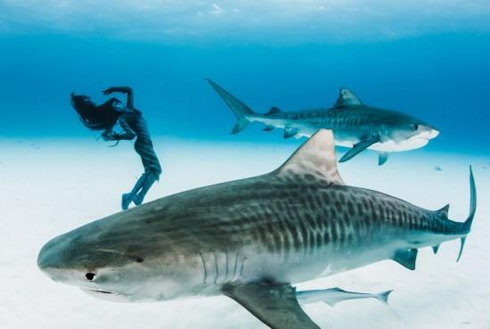 澳大利亚美女模特穿比基尼与共舞群海底虎鲨(美女国外唯美图片