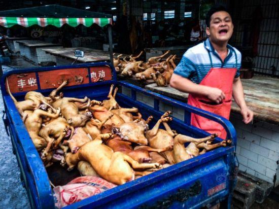 广西玉林 狗肉一条街 高清图片