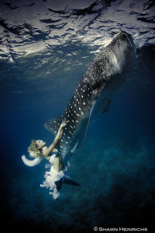 美女与虎鲨共舞 意境唯美倡导人与动物和平相