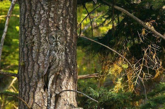 动物世界绝妙隐身术 近在咫尺难分辨