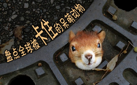 搞笑!全球被卡住的呆萌动物