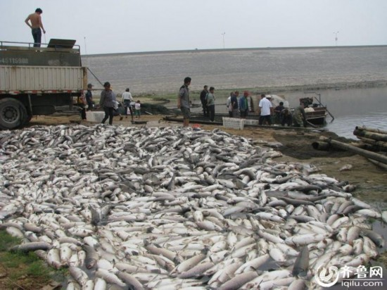 山东一水库10万斤鱼缺氧死亡