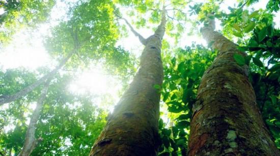 兴隆热带植物园坚持以顾客至上,服务第一为宗旨,已通过ISO9001质量管理体系和ISO14001环境管理体系认证,并先后获得并先后获得国家AAAA级旅游区、首批全国农业旅游示范点 、首批旅游景区全国青年文明号、全国青少年教育基地、全国农村科普示范基地、中国青年科技创新行动示范基地、海南文明风景旅游区示范点、海南省优秀旅游景区(点)、海南省十佳旅游景点、最具影响力的海南知名旅游景点等荣誉称号。近2年又获得了2011年海南省创先争优活动优秀旅游景区、全国青