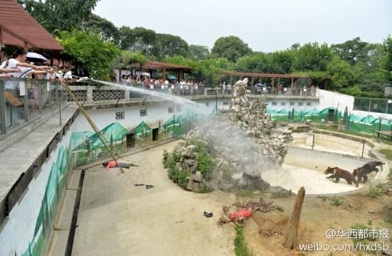"""杭州动物园熊猫遭扇子""""砸"""" 园方称游客误掉 北京动物园两女游客翻圈墙"""