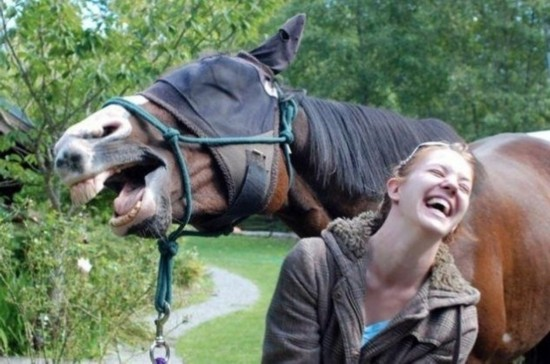 抢镜动物最搞笑 盘点那些点赞的动物照片/图