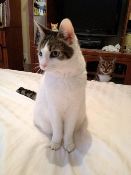 【疯狂搞笑】萌哭亿万网友的动物抢镜照