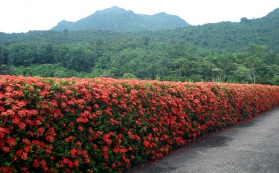 兴隆热带花园    热带花园以两大旅游区为依托,在万宁东南部海岸线上与石梅湾、日月湾、等形成了一个旅游接待的整体区域优势。