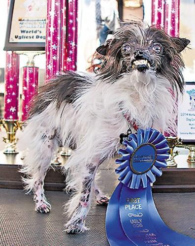 全球最丑狗比赛冠军出炉 外表丑陋性格活泼(图)