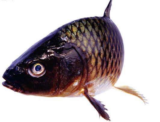 带寄生虫的鱼-鱼类营养价值虽高 但有四种鱼不能吃