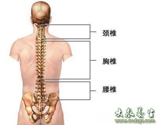 肩颈是毒素最容易堆积的地方